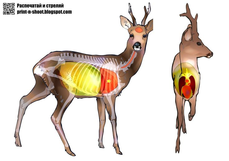 image relating to Deer Vitals Target Printable referred to as Deer Goals For Taking pictures Estimates of the Working day