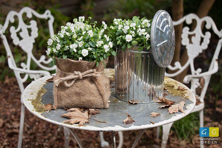 Een witte compositie met viooltjes in een jute zak of een metalen emmer, het kan allebei.