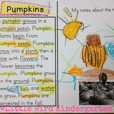 Little Bird Kindergarten: Pumpkins: they're not just for Halloween anymore! Close reading and annotating in kindergarten!