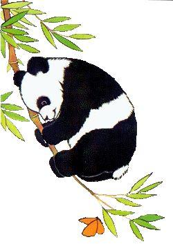 Best 25 Osos pandas animados ideas on Pinterest  Polar