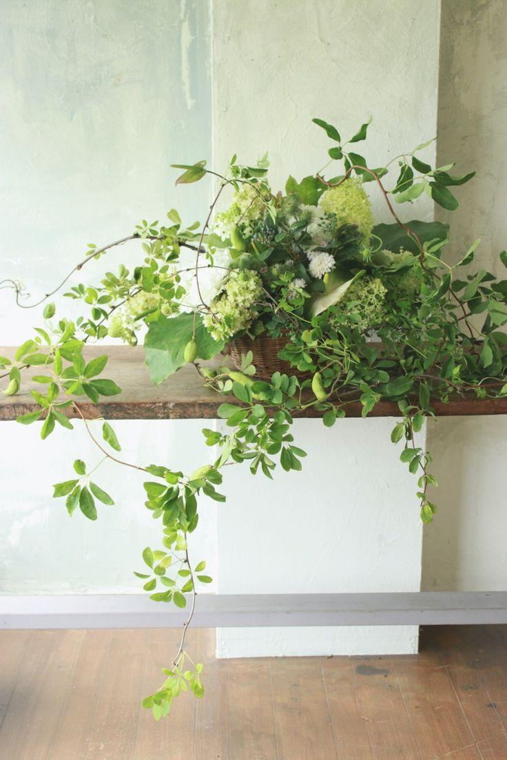 Staff blog: 旬の植物たち