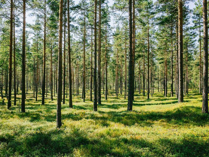 https://flic.kr/p/p4EAhM | Woodland | Finland  Instagram | VSCO | 500px