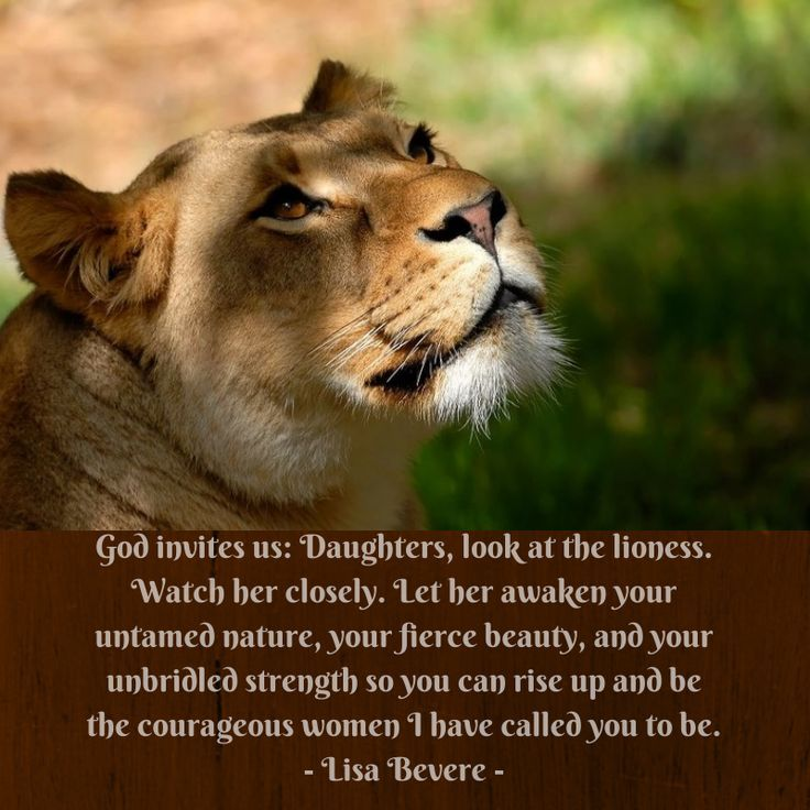 Lion And Lioness Strong Quotes Quotesgram Besthanukkahgiftsco