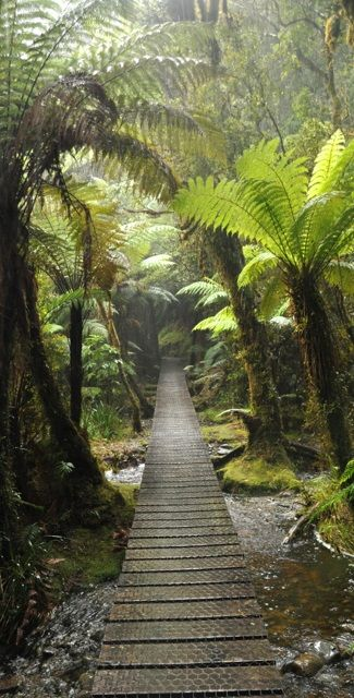 Pretty trail among the fern trees - NZ www.facebook.com/loveswish