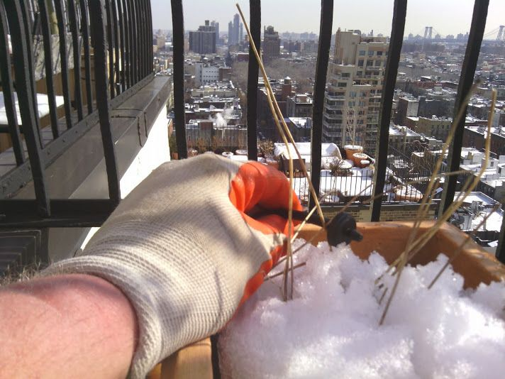 Winterizing your drip irrigation by New York Plantings Irrigation and Landscape Lighting  333 E 14 st   box 1229 Manhattan, NY 10009  646-434-8049     Site url:     http://www.newyorkplantings.com/Irrigation.html
