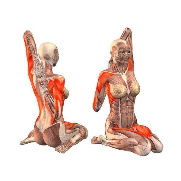 Hero pose, upper left hand grab - Gomukha Virasana left - Yoga Poses | YOGA.com