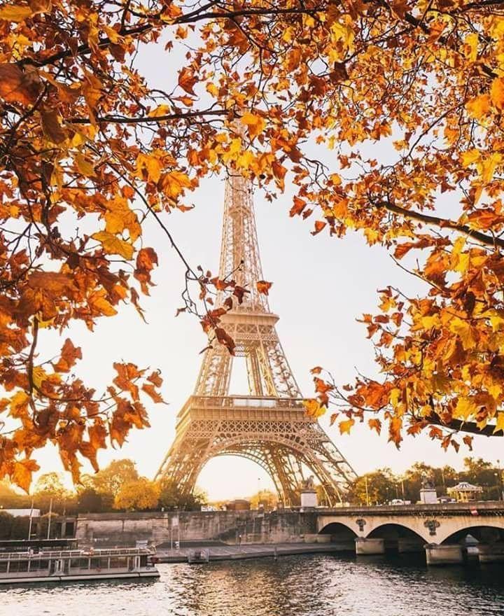 джек-рассел-терьер картинки осень в париже красивые цвет озера, который