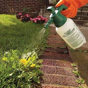 Great blog about how to treat weeds in your lawn.....