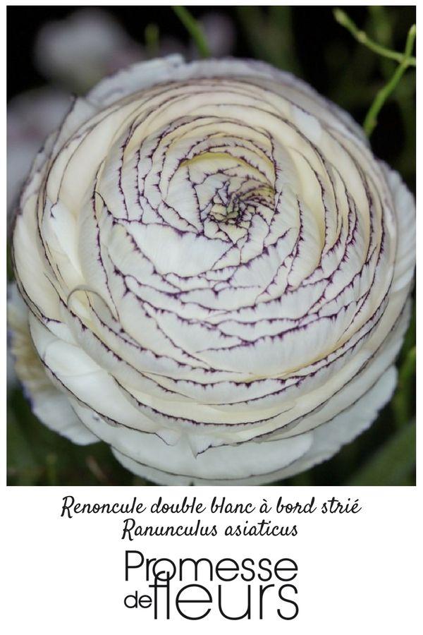 43 best bouquets fleurs du jardin images on pinterest flower arrangements floral arrangements. Black Bedroom Furniture Sets. Home Design Ideas