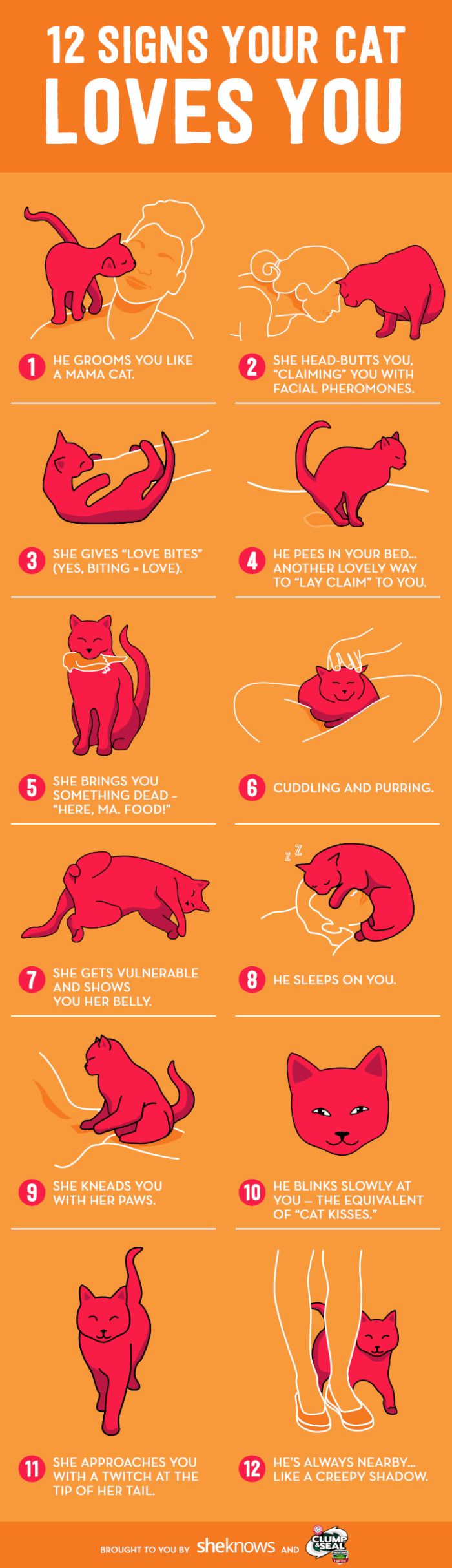 12 surprising (and sometimes creepy) signs your cat doesn't actually hate you