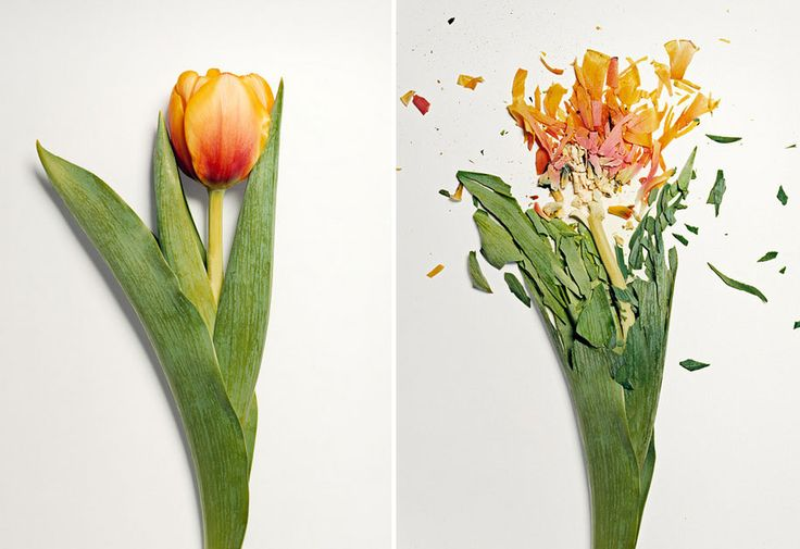 Flowers Soaked in Liquid Nitrogen Shattered Into Pieces   DeMilked