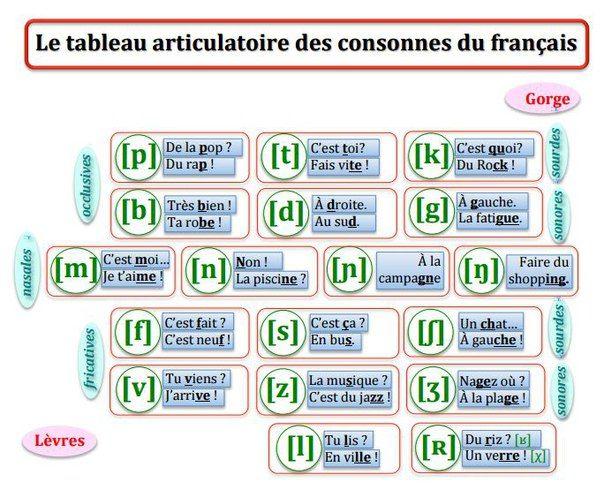 tableau articulatoire des consonnes #consonnes