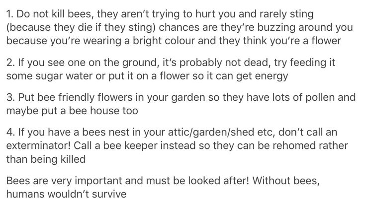 Bees scare the hell out of me. But they are more important to the sustainability of our planet than I am, so I do my best to keep them alive and unharmed. Wasps can rot though.