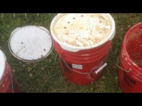 Cut Your Chickens Feed Bill by Fermenting - The Permaculture Research Institute