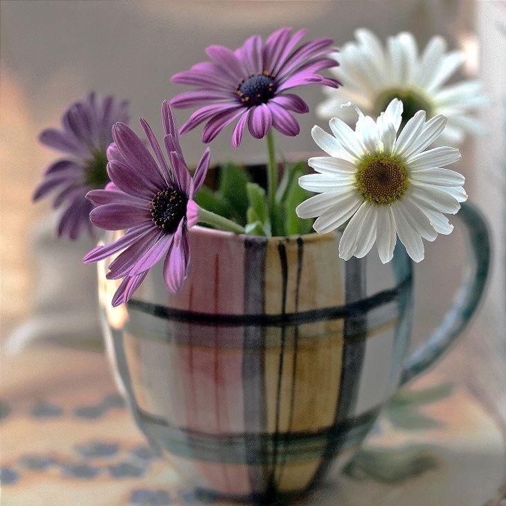 цветоводов-любителей картинки про цветы и доброе утро выручает