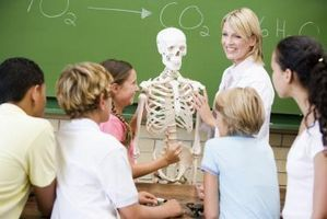 Activities on the Skeletal System thumbnail