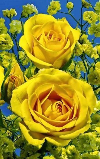 Τα κίτρινα ....σαν το ήλιο !!!!!!!!!