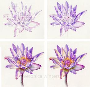 4 Colored Pencil Techniques You Need to Know - steps in layering colored pencil