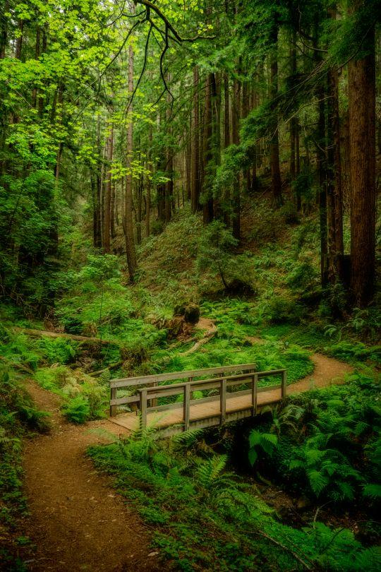 In the Deep Woods byTom
