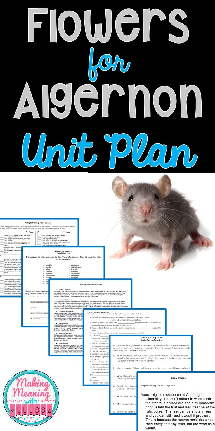 Engaging Flowers for Algernon resources, including a pre-reading guide full of ideas, Vocabulary activities, and Study Guide Questions. Great for upper-elementary and middle school.