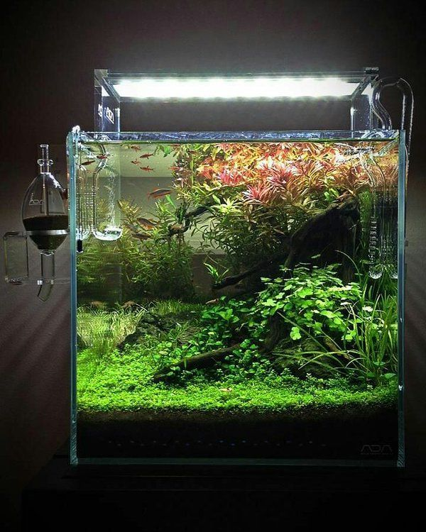 694 best planted nano tanks images on pinterest fish for Ada fish tank