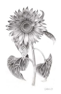 Sunflower tattoo sketch