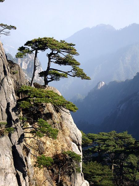 Huangshan, China. Inspiration for Chinese painters and landscape artists.