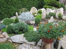 Výsledek obrázku pro borovice do malé zahrady