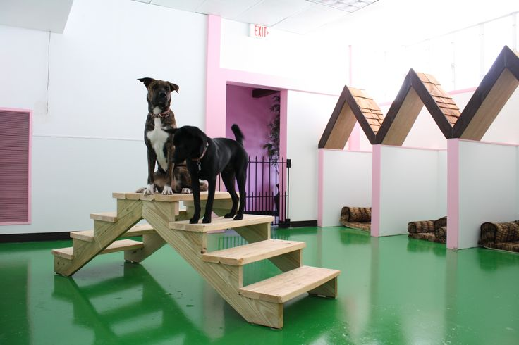 Best 74 Dog Daycare Images On Pinterest Other Discover