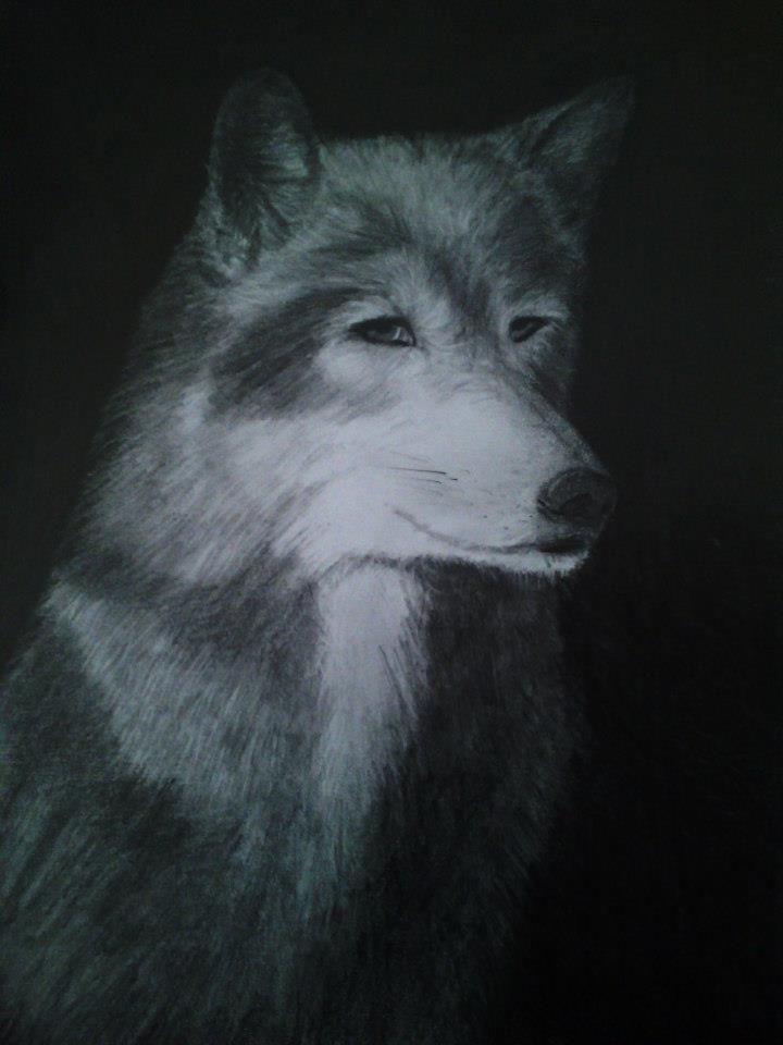 wolf by vladena13.deviantart.com on @DeviantArt