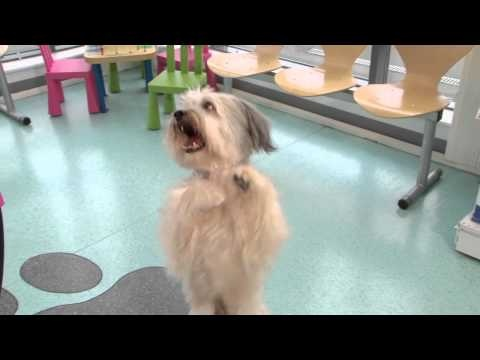 Ashleigh and Pudsey demonstrate their tricks at Vets4Pets