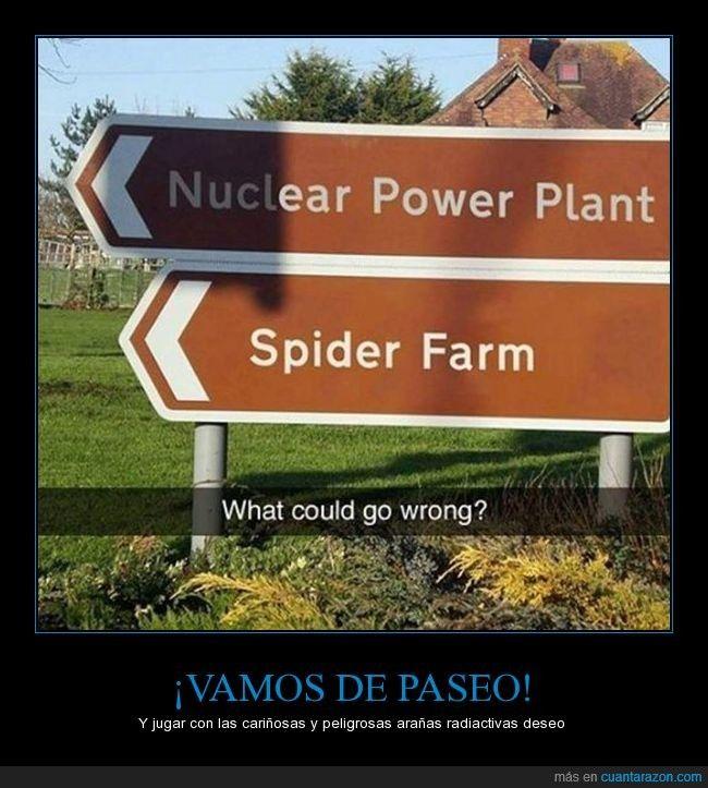 Te vas a encontrar unas arañas grandes como tu cabeza - Y jugar con las cariñosas y peligrosas arañas radiactivas deseo   Gracias a http://www.cuantarazon.com/   Si quieres leer la noticia completa visita: http://www.estoy-aburrido.com/te-vas-a-encontrar-unas-aranas-grandes-como-tu-cabeza-y-jugar-con-las-carinosas-y-peligrosas-aranas-radiactivas-deseo/
