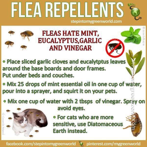 DIY flea repellant... Save for humans & pets!