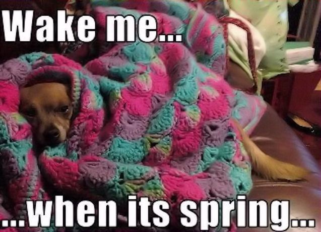 Wake me when its spring funny quotes animals quote winter winter quotes spring quotes funny animals