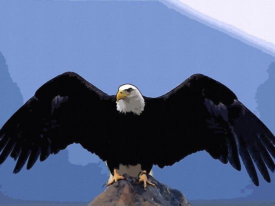 """bald eagle wingspan"" by Adam Asar | Redbubble"