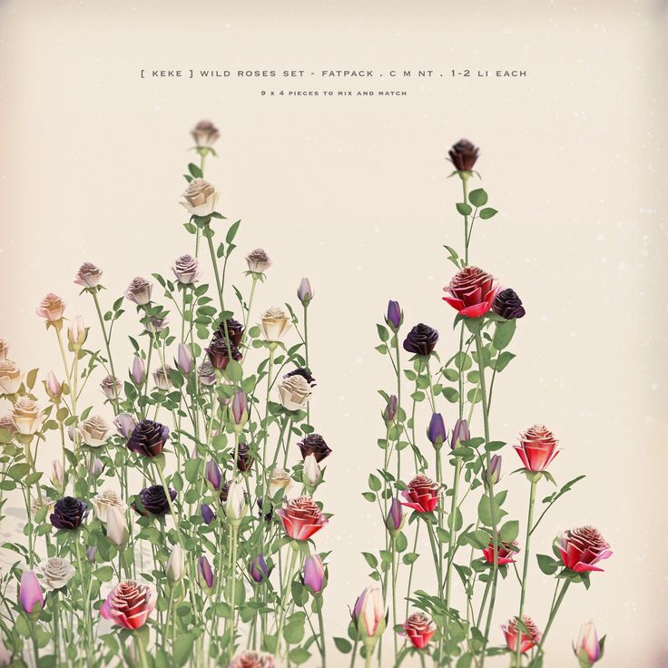 https://flic.kr/p/MsG7iR | [ keke ] wild roses fatpack | ★ out for Lost…
