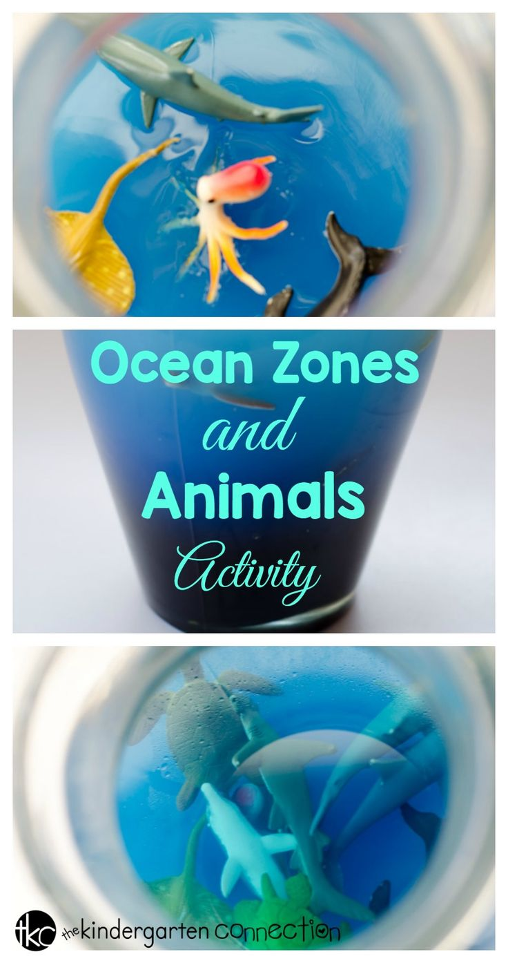 154 best preschool science projects images on pinterest science children will learn all about the ocean in a fun hands on way with this sciox Image collections