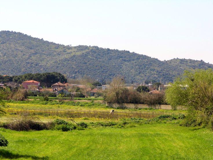 Bağarası /Aydın/Turkey