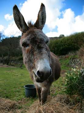Tamar Valley Donkey Park.  Can't seem to convince my husband that we need to go here.