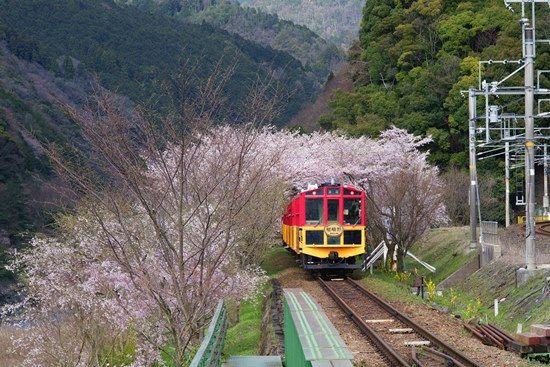 Jalur Kereta wisata Sagano