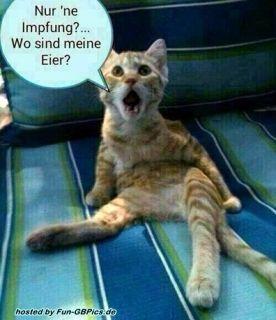 Lustiges Whatsapp Fun Bild
