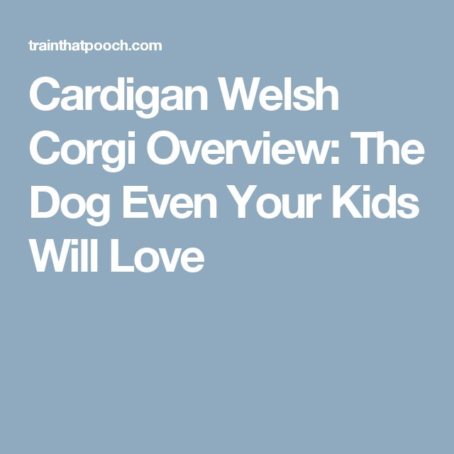 Cardigan Welsh Corgi Overview: The Dog Even Your Kids Will Love