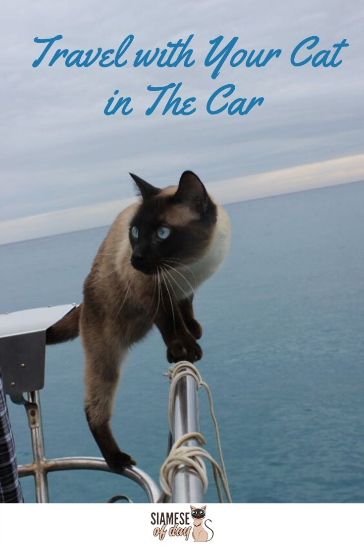 How To Travel With Your Cat In The Car In 2020 Cats Kitten Care Kitten Proofing