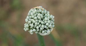 Czy warto zbierać nasiona na działce?