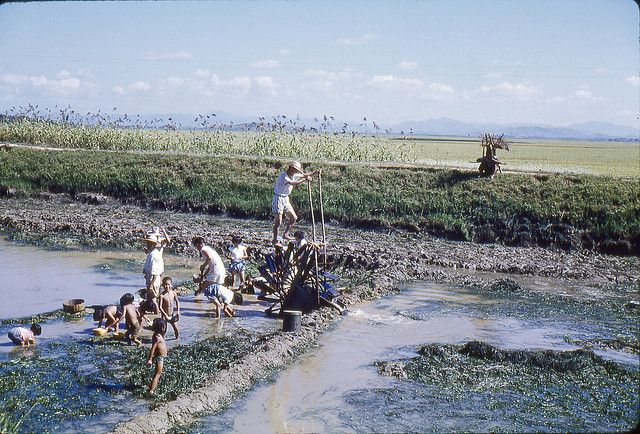 Korean farmers irrigating a rice field in 1960 using an old fashioned man-powered water wheel pump. The location is in or near what is now called Iksan City - the name was changed from Iri to Iksan about 20 years ago according to a Korean friend. Other modern names for Iksan are Ekizan and Ekisan. The city of Jeonju (aka Cheonju, Chonju) is about 20-30 kilometers east-southeast of Iksan - both cities are in the Jeollabuk-do province (aka Chollabuk-do) of southwestern South Korea. Bill…
