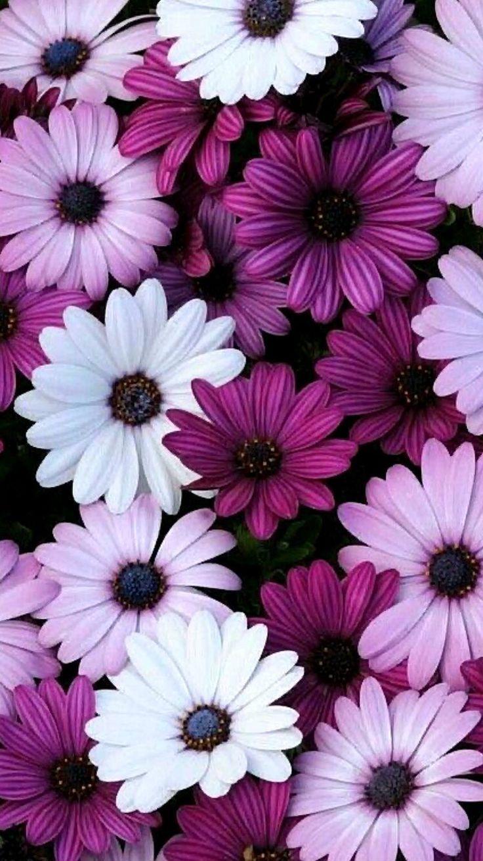 Das Handy Wallpaper Hintergrundbilder Das Handy Wallpaper Hintergrundbilde Flower Iphone Wallpaper Purple Flowers Wallpaper Flower Phone Wallpaper