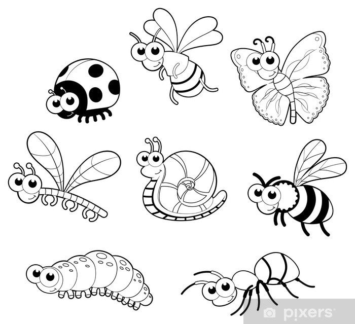 Insectos Para Colorear Buscar Con Google Animales Con Alas Actividades De Insectos Insectos