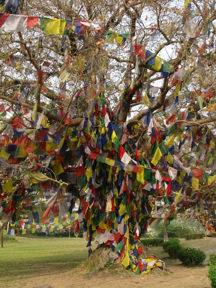 Lumbini, Nepal - Not long til our trip to see the birthplace of the Buddha