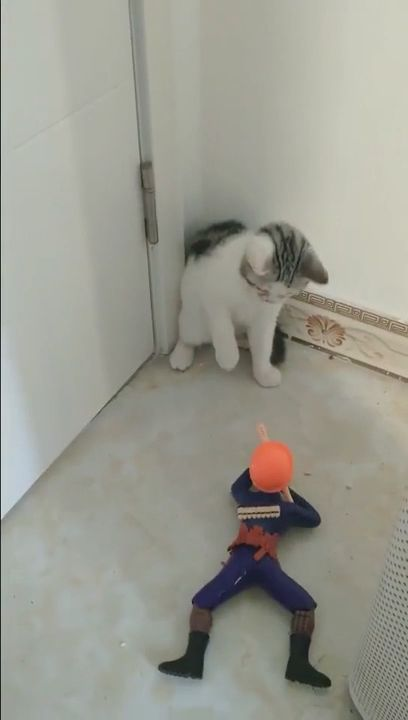 Poor Kitten it's just a toy ??