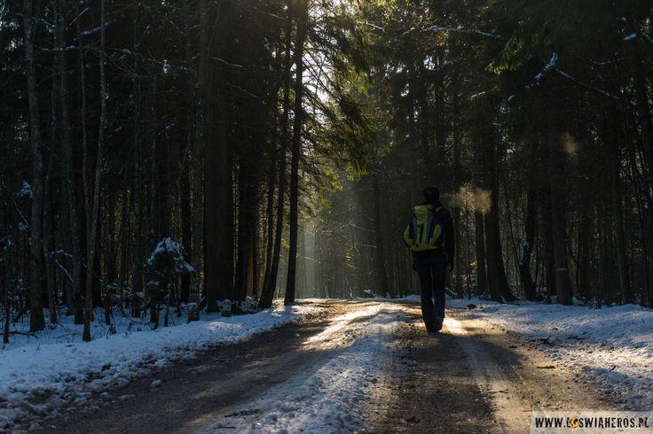 Białowieża forest during the winter, freezing day/ Puszcza Białowieska w mroźny, zimowy dzień.